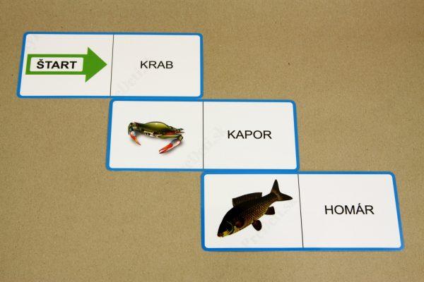Domino - Vodné živočíchy (ukážka vybraných kariet)