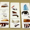 Kde žijú zvieratá MAXI - malé obrázkové karty