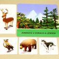 Kde žijú zvieratá MAXI - základná karta s vybranými obrázkovými kartami (Zvieratá v horách a lesoch)